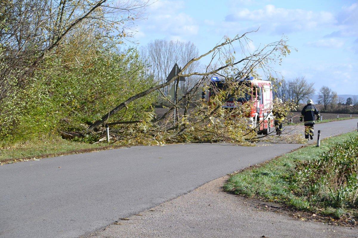 Sturmschäden in Königsbrunn